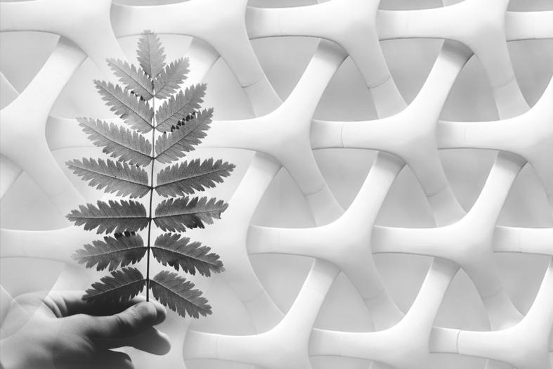 Roadmap 2050 Biobasierter Kunststoff – Kunststoff aus nachwachsenden Rohstoffen